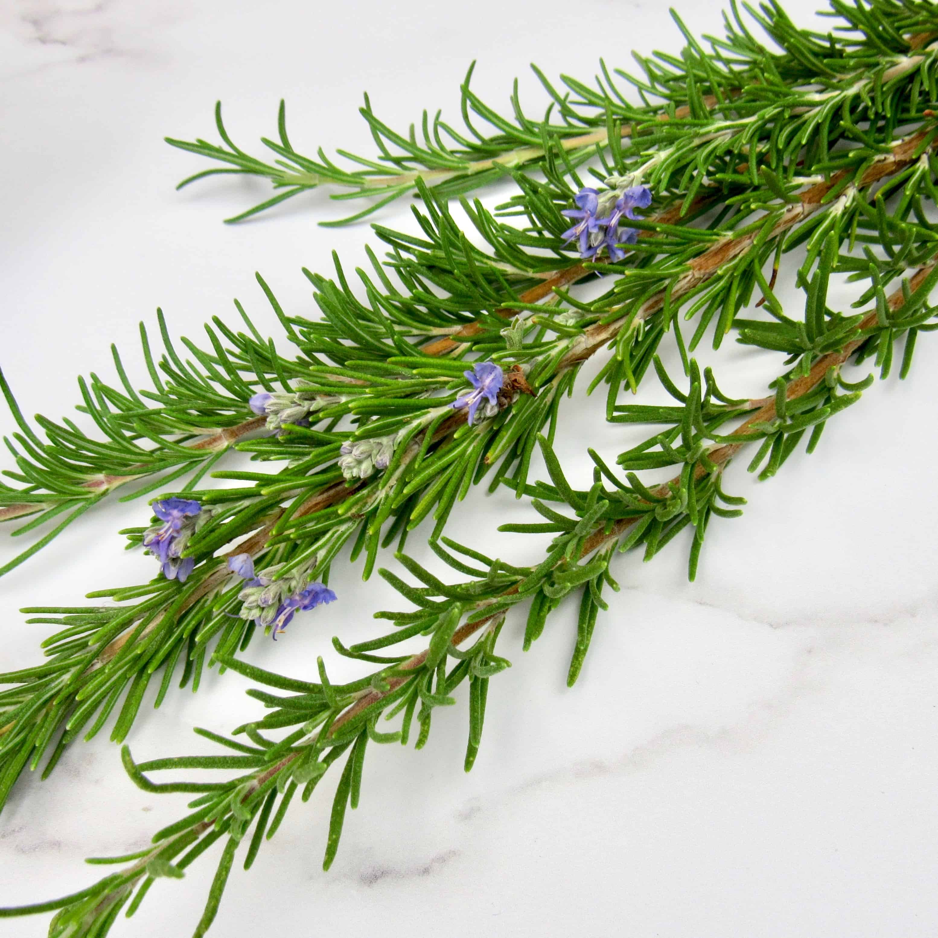 5 sprigs of rosemary on white marble counter
