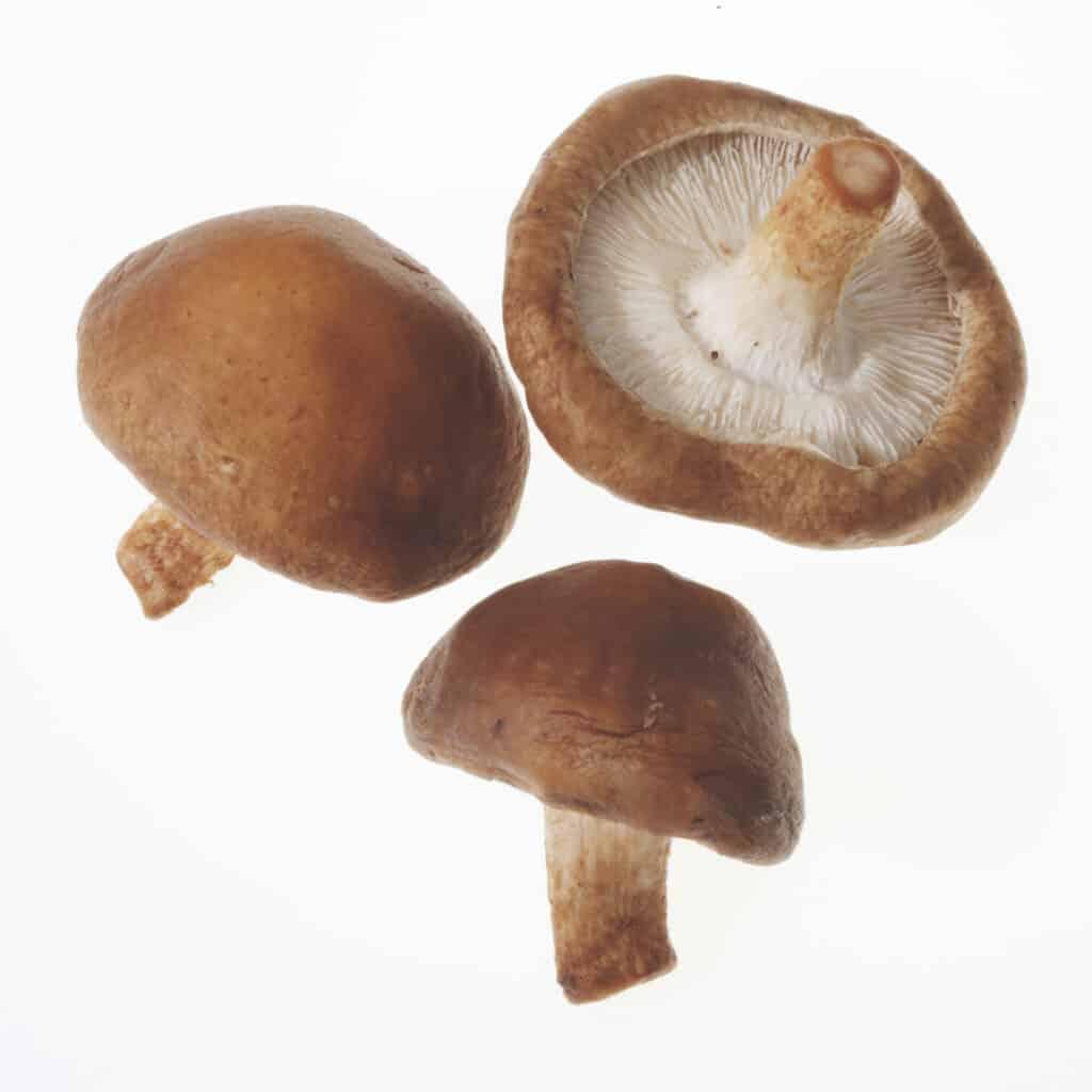 Shitaki Mushrooms